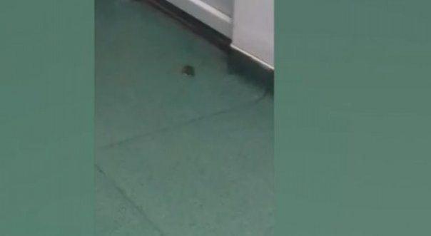 Imagini REVOLTATOARE surprinse intr-un spital din Romania! Un soarece a fost filmat in salonul unui copil