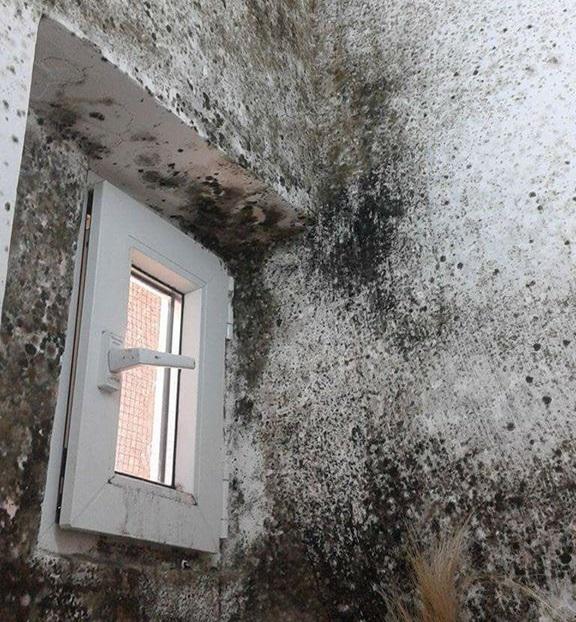 Imagini revoltătoare în grupul sanitar al unei secţii medicale din Botoşani
